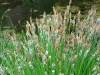 Úžasná tráva
